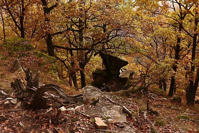NP Podyjí - podzim u Pašerácké stezky